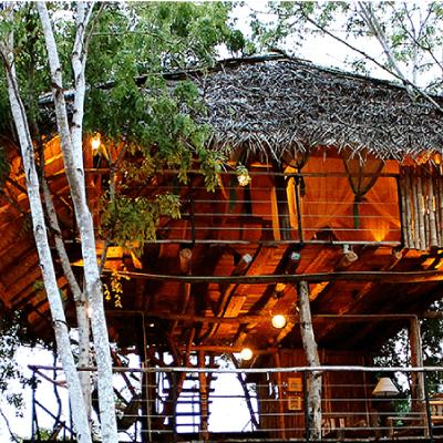 LMD-MALL-(HOTEL)-SARAII-TREE